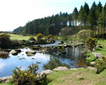 Bellever Forest, Dartmoor Picture