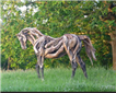 Heather Jansch Picture